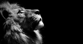 oroszlán fekete-fehér