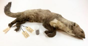 Fotó: Rotterdami Természettudományi Múzeum