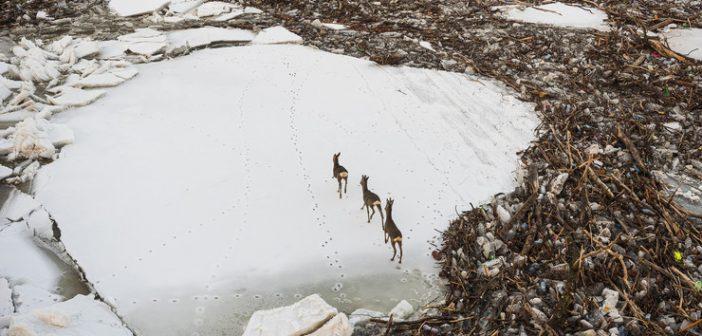 Tisza jeges ár (4)