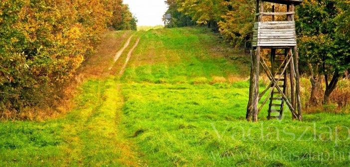 Erdészeti albizottság: telepítésre ösztönöz az erdőtörvény módosítása