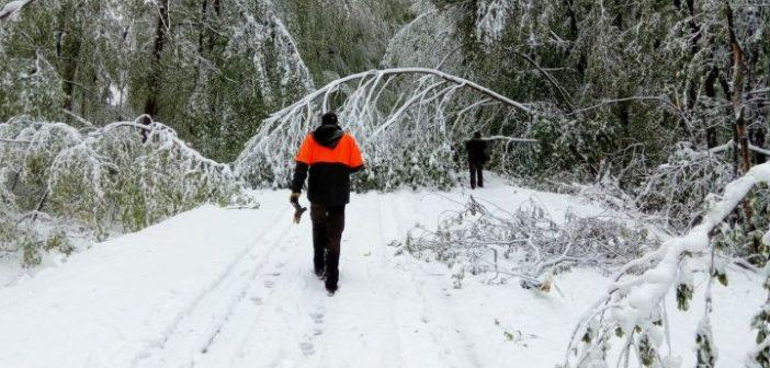 Komoly károkat okozott a pécsi erdőkben az áprilisi hó