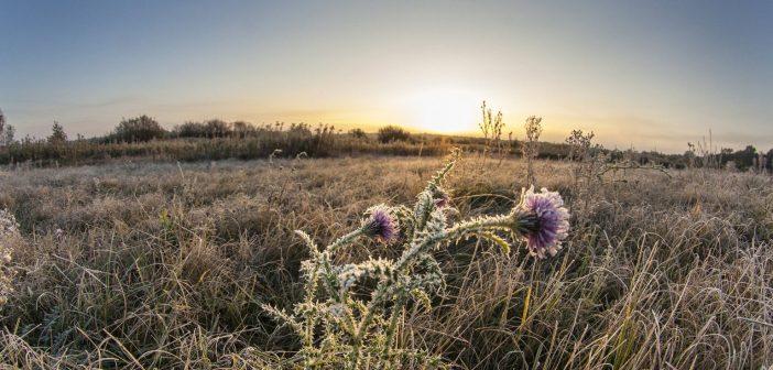 Deres virág egy legelőn, Homokkomárom közelében (MTI Fotó: Varga György)