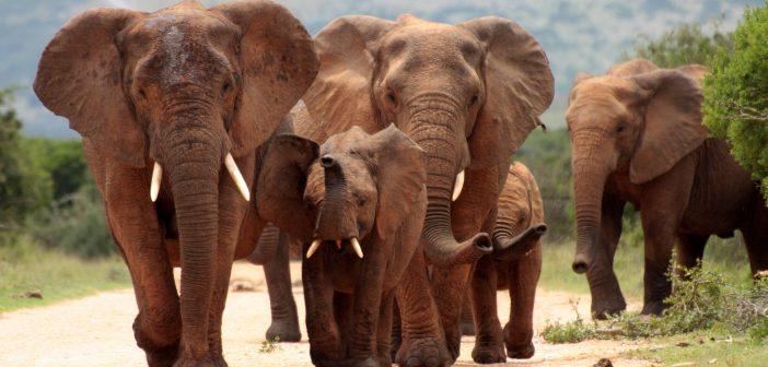 Megölték az ismert elefántvédőt