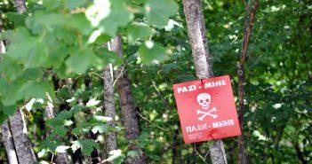 Boszniai erdőkép – Illusztráció