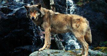 Fotó: Chris Martin Bahr (WWF)