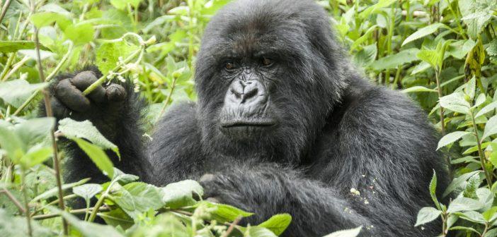 Két faj kikerült a súlyosan veszélyeztetett csoportból!