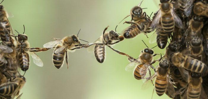 Egymilliónál is több aláírást gyűjtöttek rovarpusztulás feltartóztatásáért
