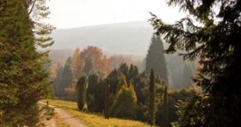 Kegyeleti erdő