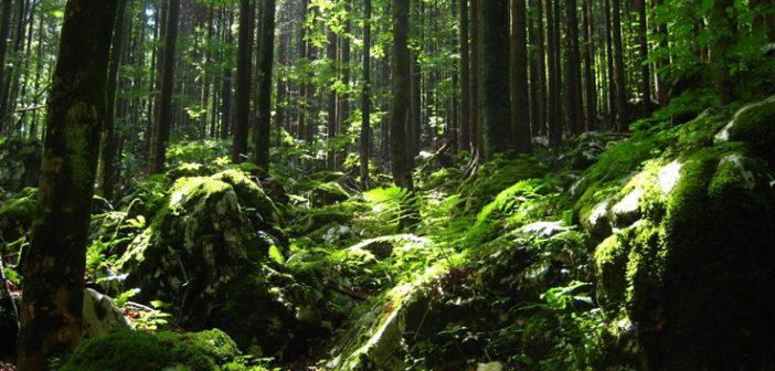 Fotó: Gálhidy László / WWF