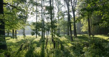 Pillanatkép egy német erdőből – Fotó: Wikimédia