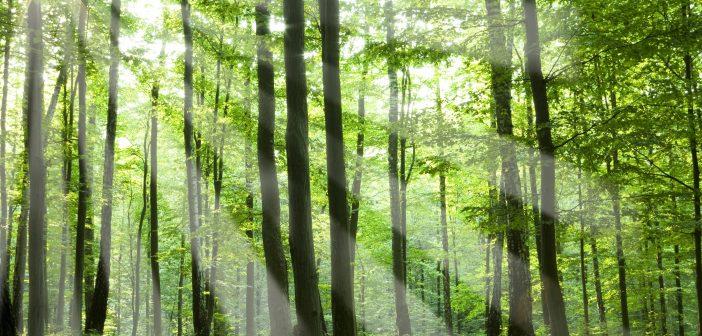 Elérhetőek a legfrissebb hazai erdészeti statisztikák