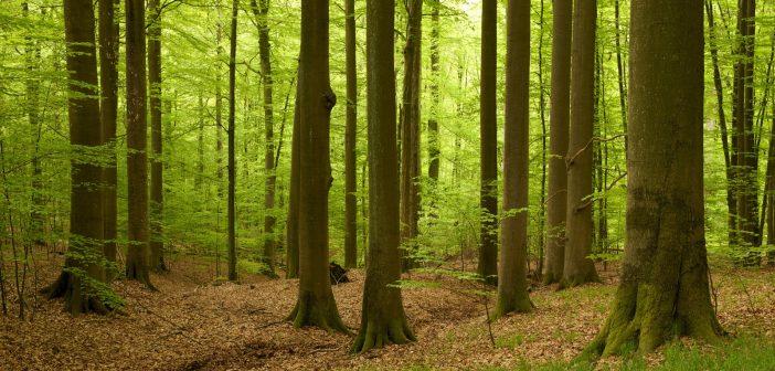 (kép: planet-wissen.de)