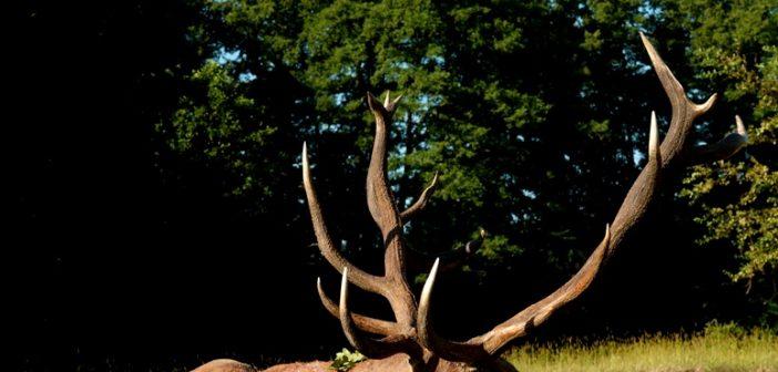 Lábod elmúlt 20 évének legnagyobb bikája