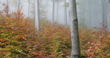 Mi fán terem az erdő? – Új kampányt indít az Országos Erdészeti Egyesület