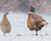 Változások a vadgazdálkodásban